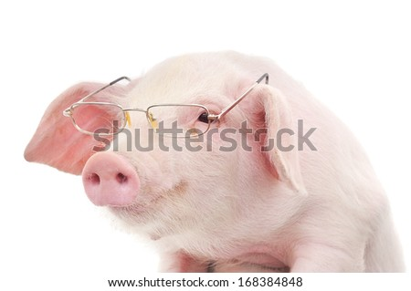 Portrait of a cute pig in glasses on white background - stock photo