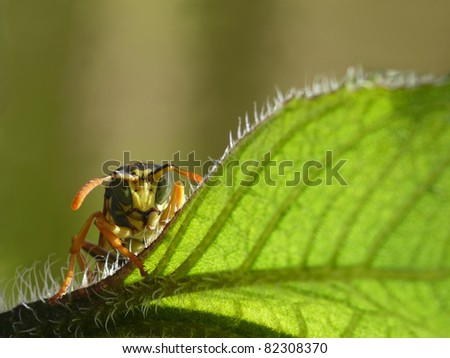 Portrait of a danger looking wasp - stock photo