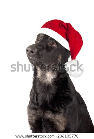 Portrait of a dog, a German Shepherd puppy in a red cap of Santa Claus isolated on white background