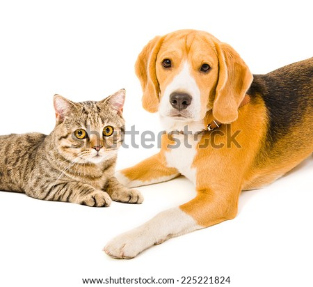Portrait of a dog and a cat lying together - stock photo