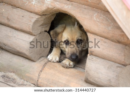 Portrait of a dog in a wooden kennel
