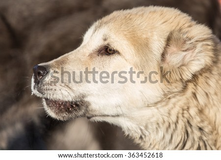 Portrait of a dog on the nature