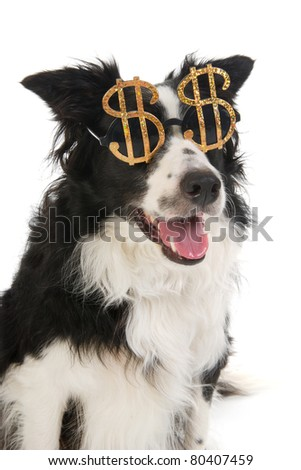 Portrait of a dog with dollar sunglasses - stock photo