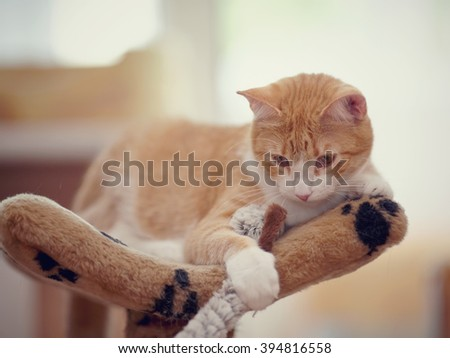 Portrait of a domestic striped cat of a red color with a toy. - stock photo