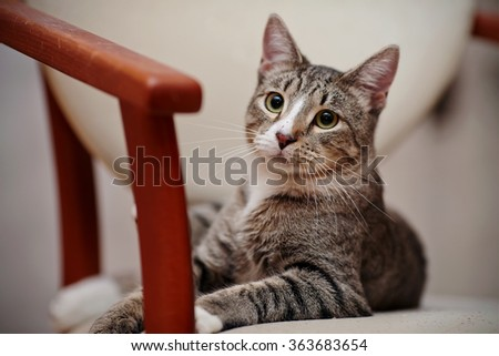 Portrait of a domestic striped young cat lies on a chair. - stock photo