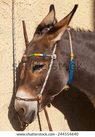 Portrait of a donkey in Santorini island, Greece. - stock photo