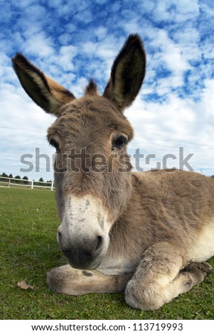 portrait of a donkey on the farm