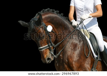 Portrait of a dressage horse during the test.