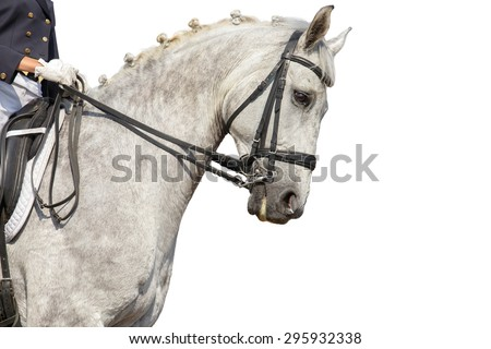 Portrait of a dressage horse on white background. - stock photo