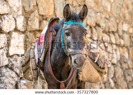 Portrait of a dunkey with bags in Iran  - stock photo