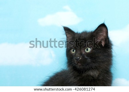 Portrait of a dusty dirty black 8 week old kitten looking to the side, blue background with white clouds. - stock photo
