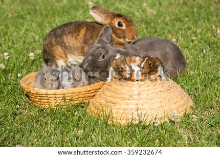 Portrait of a family's rabbit and guinea pigs in basket - stock photo