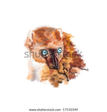 Portrait of a female Blue-Eyed Black Lemur (Eulemur macaco flavifrons). Genuine high resolution digital artwork suitable for print. Not a scan! - stock photo
