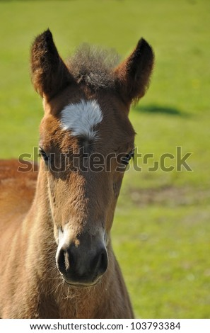 Portrait of a foal in a sunny landscape in spring - stock photo