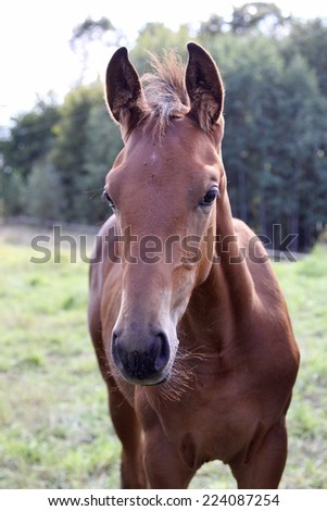 portrait of a foal of brown color against greens. - stock photo