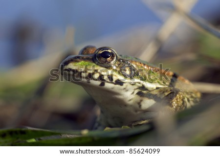 portrait of a frog in the water