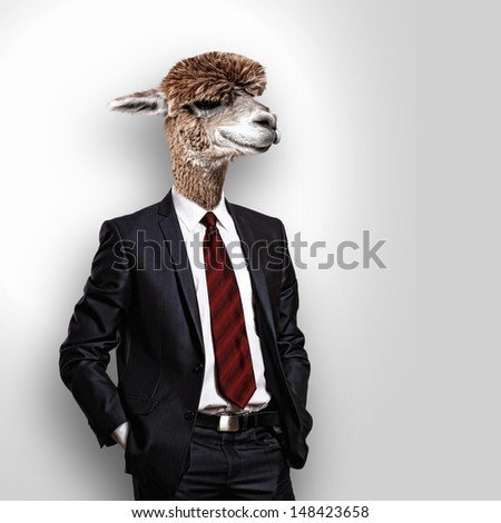 Portrait of a funny camel in a business suit on a gray background. collage - stock photo