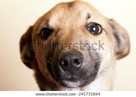 Portrait of a funny dog. Shallow depth of field. - stock photo