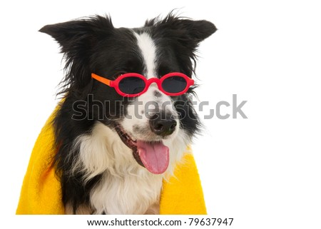 Portrait of a funny dog which is ready for the vacation