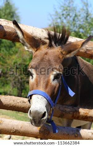 portrait of a funny donkey at a farm - stock photo