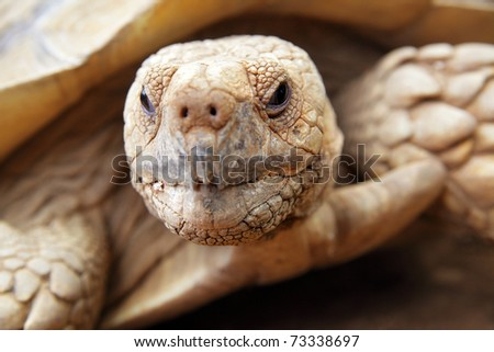 Portrait of a giant tortoise close up - stock photo