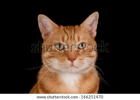 Portrait of a ginger, isolated on black - stock photo