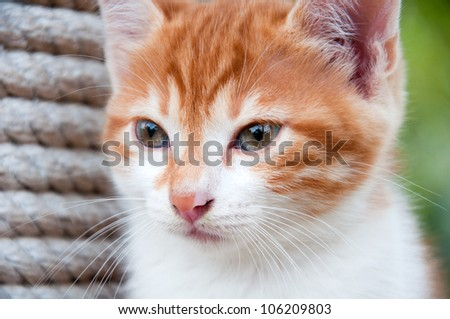 Portrait of a ginger kitten on the nature