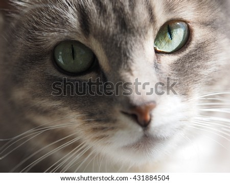 Portrait of a gray cat