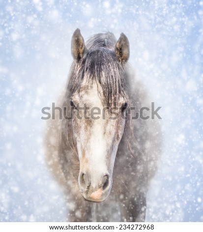 Portrait of a gray horse in winter snow - stock photo