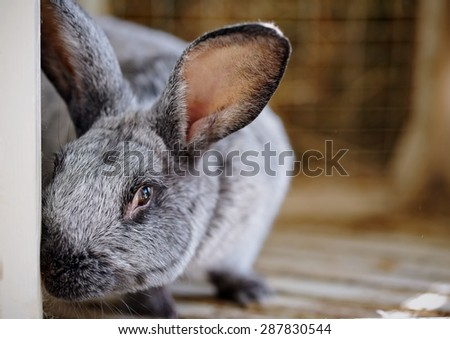 Portrait of a gray rabbit in a cage. - stock photo