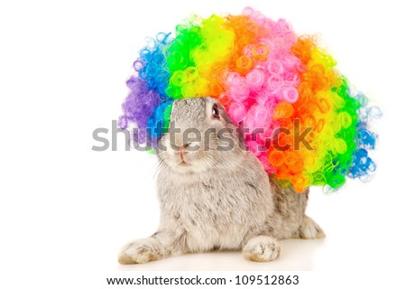 Portrait of a gray rabbit in colored wig