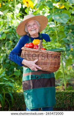 Portrait of a Happy Elderly Woman at the Garden Holding a Basket Full of Fresh Vegetables While Looking at the Camera. - stock photo