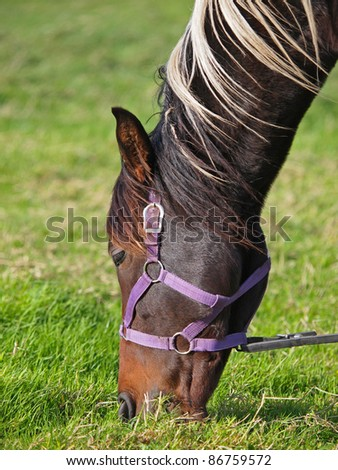 Portrait of a horse grazing - stock photo