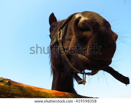 portrait of a horse on a background of blue sky, big muzzle in front - stock photo