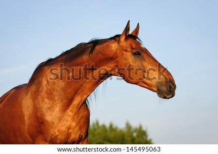 Portrait of a horse on the background of sky
