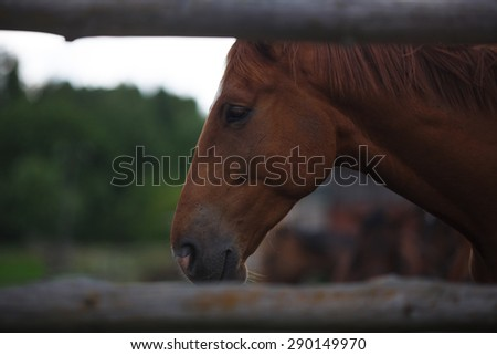 Portrait of a horse on the meadow before thunderstorm  - stock photo
