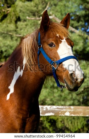 Portrait of a horse standing in a field. - stock photo