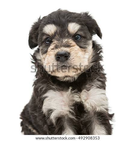 Portrait of a little, sweet puppy isolated on white background