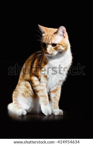 Portrait of a little tabby kitten closeup - stock photo