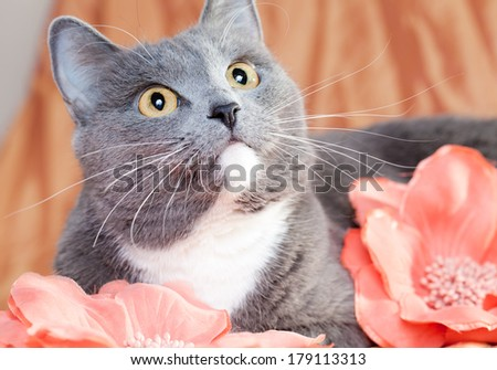 portrait of a lovely kitten on a light background