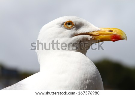 Portrait of a Maive - stock photo