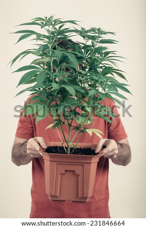 Portrait of a man holding flowerpot with Cannabis plant. - stock photo