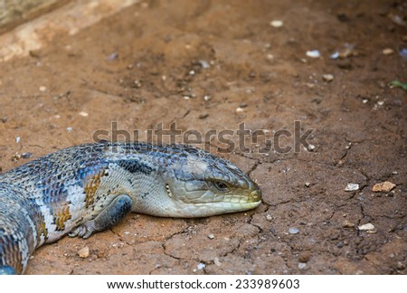 portrait of a monitor lizard on a background of the earth