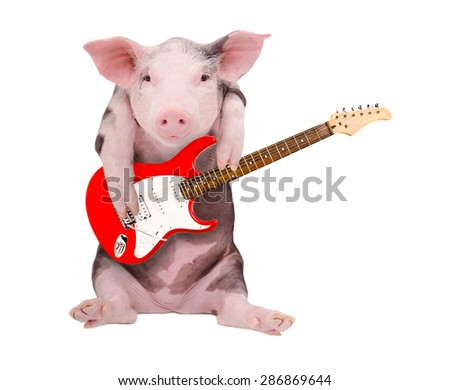 Portrait of a pig who plays the the guitar isolated on white background - stock photo