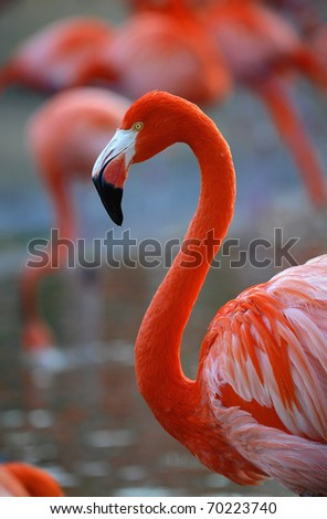 Portrait of a pink flamingo in a profile. - stock photo