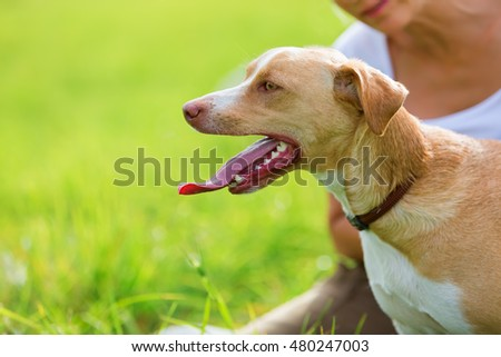 portrait of a Podenco Mix with a woman