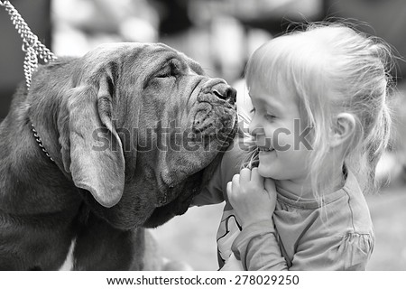 Portrait of a purebred dog Neapolitan Mastiff with little girl - stock photo