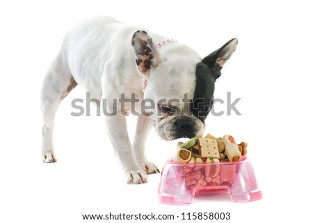 portrait of a purebred french bulldog and pet food in front of white background