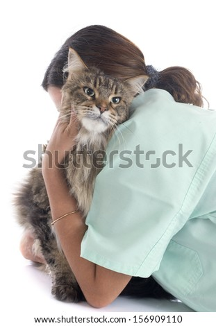 portrait of a purebred  maine coon cat and vet on a white background - stock photo