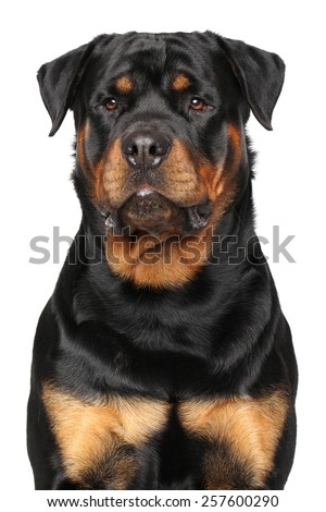 Portrait of a purebred Rottweiler isolated on white background - stock photo